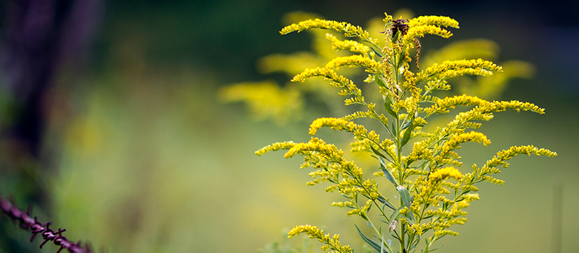 Tips on Surviving Hay Fever
